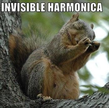 cute squirrel jamming out