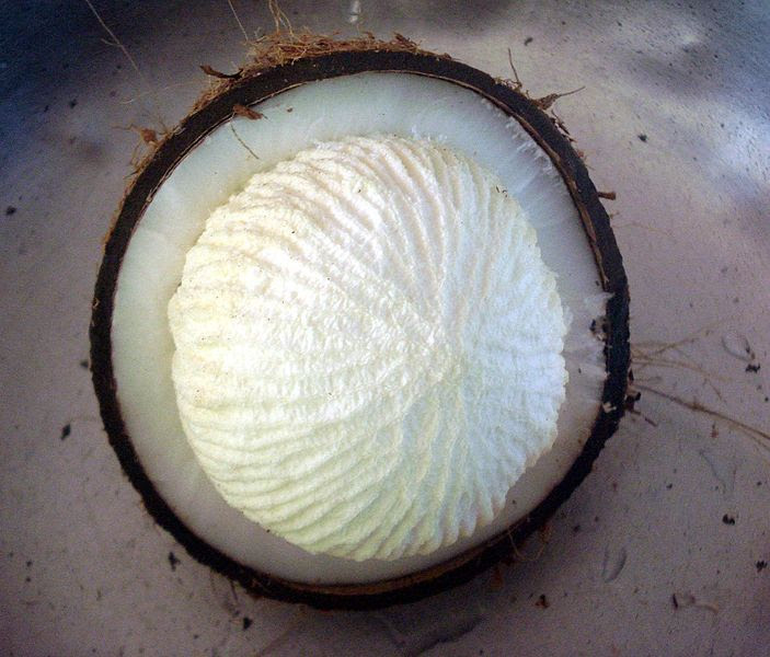 File:Coconut pong inside.JPG