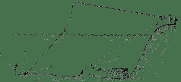Полудонка и донка на угря
