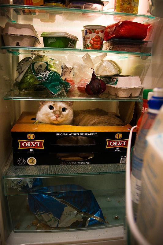 My Little Refrigerator Cat