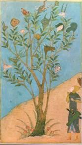 El legendario árbol Vakvak