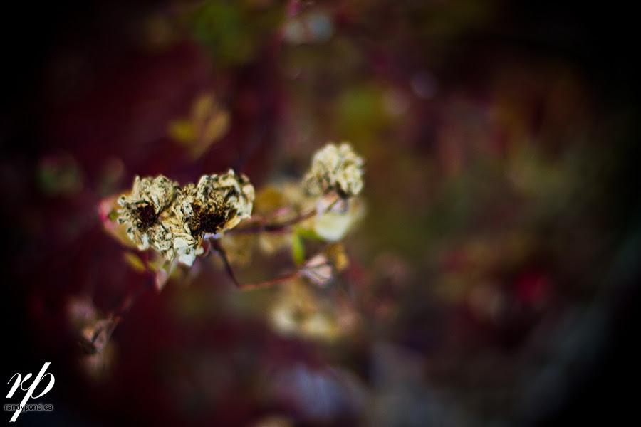 ~ 311/365 Front Garden ~