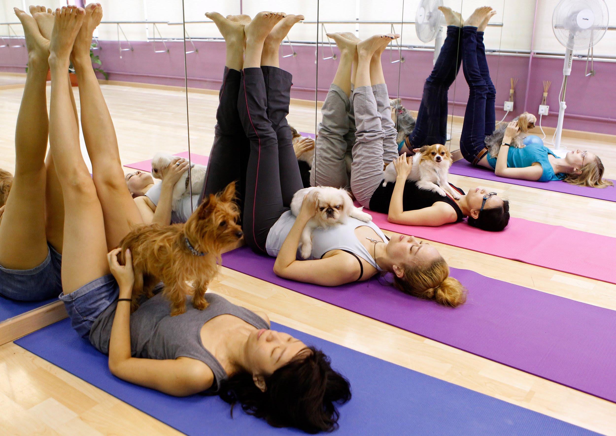 Image result for dog yoga