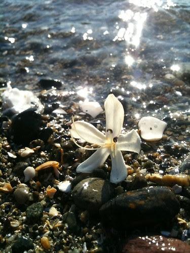 Beach Flower by Ayala Moriel