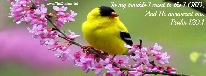 Facebook Cover Image Beautiful Bird Thequotesnet