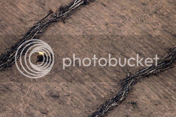 photo Amazonia-03_zpsc6795359.jpg