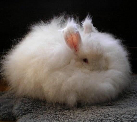 """White Angora Rabbit Spinning Fiber from Friends in Fiber 1 oz. """"Snezhinka"""""""