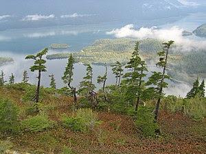 Prince William Sound, Alaska, with Tsuga merte...