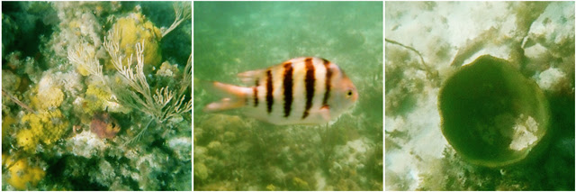 snorkel-montage