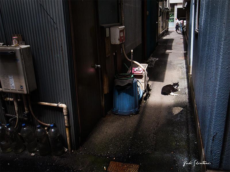 cat straycat 猫 野良猫 Tokyo