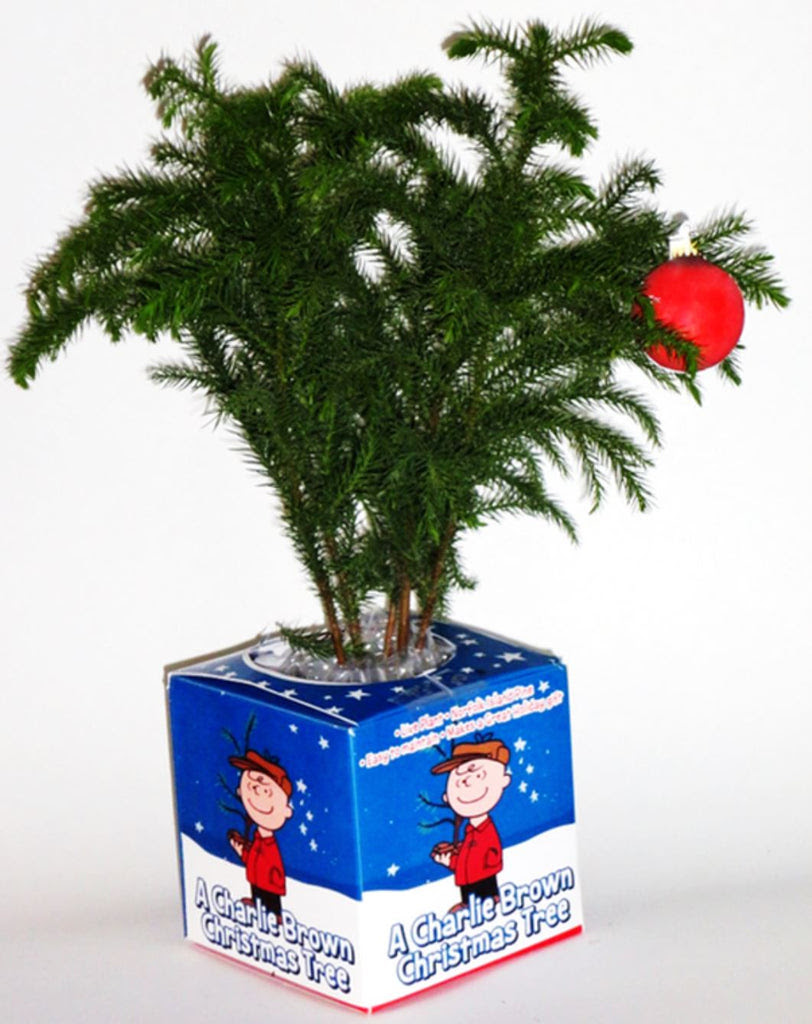 Charlie Brown Christmas Tree By Triumph Plant Enrootproducts