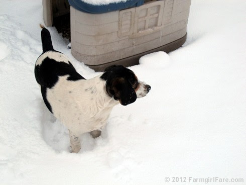 Snow dogs 1 - FarmgirlFare.com