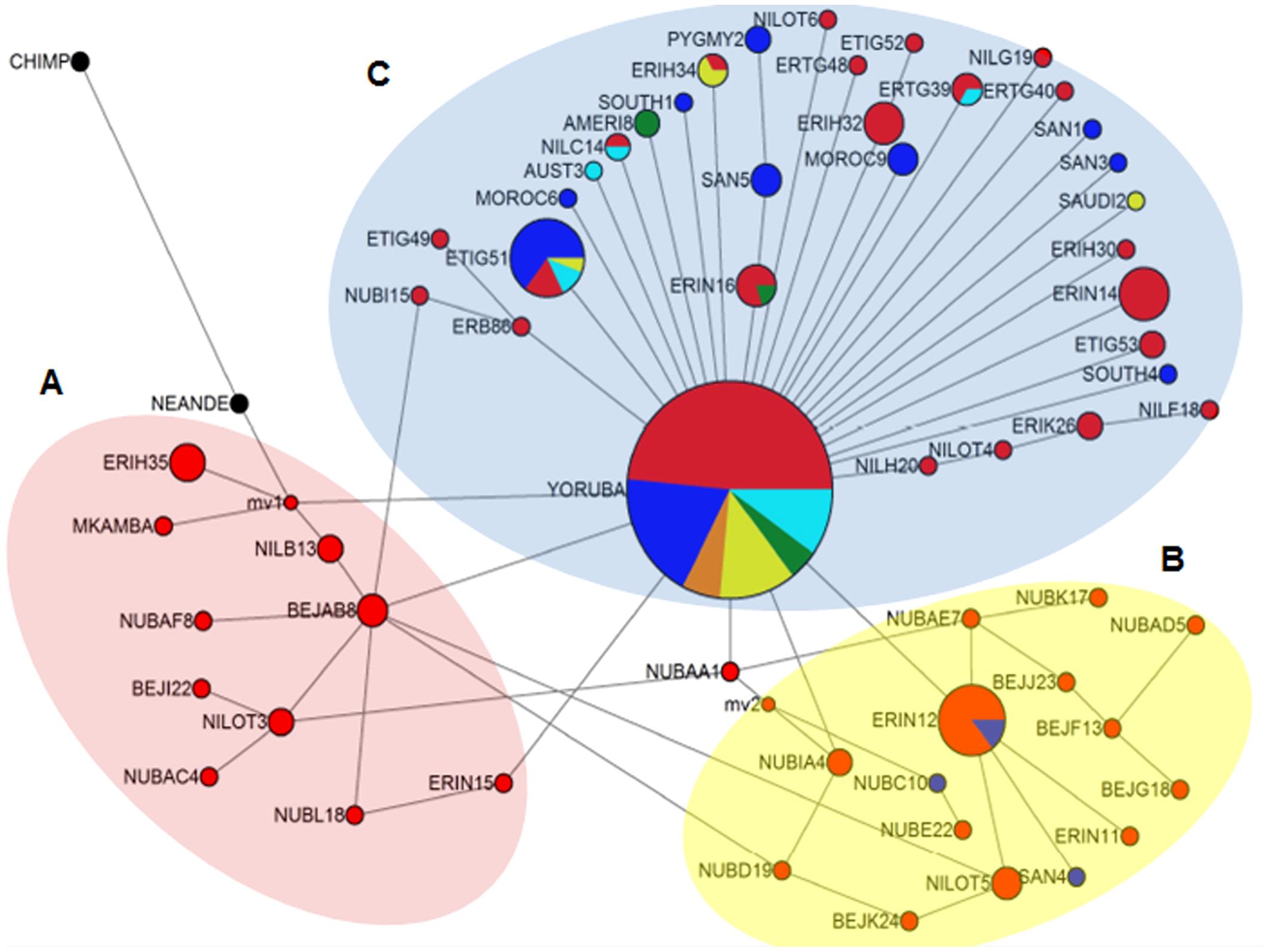 Figure 3 Median joining (MJ) Network tree.