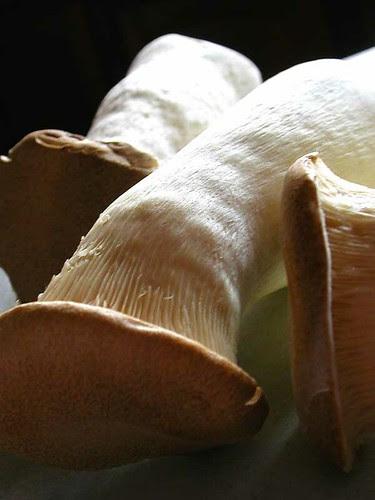 eryngii mushrooms