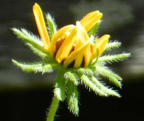 todayflowersDSCN8803