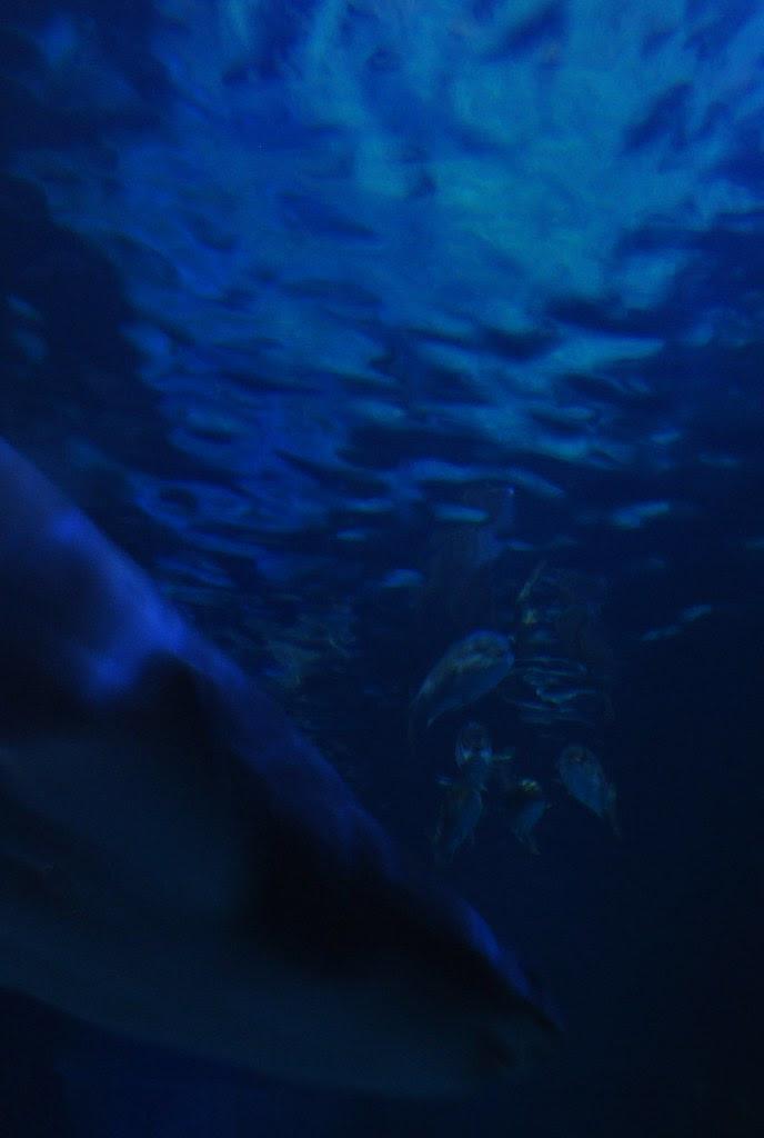 Shark Tank 2