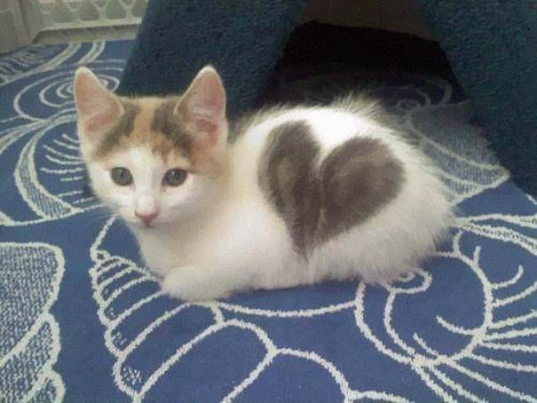 Γάτες που έγιναν διάσημες χάρη στα σημάδια της γούνας τους (5)