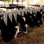 מחיר החלב יירד ביולי למחלבות - לא תהיה הוזלה לצרכנים - ynet ידיעות אחרונות