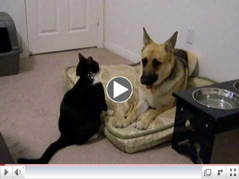cats wagging tail