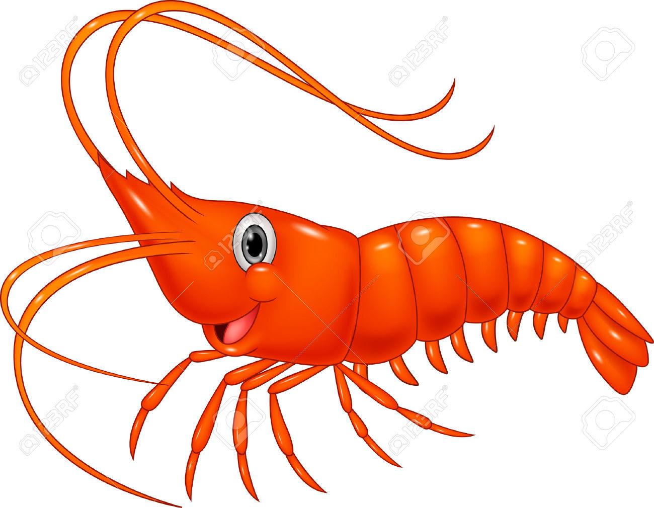 shrimp clipart 5
