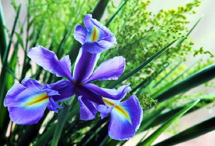 flores do jardim