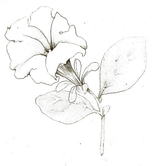 Easy Flower Pencil Drawings