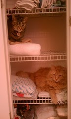 Maggie and Jasper in the linen closet