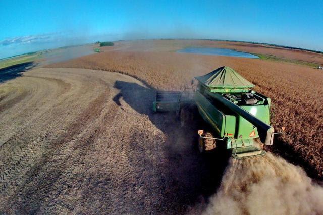 Expansão eleva a dependência da soja para a econômica gaúcha