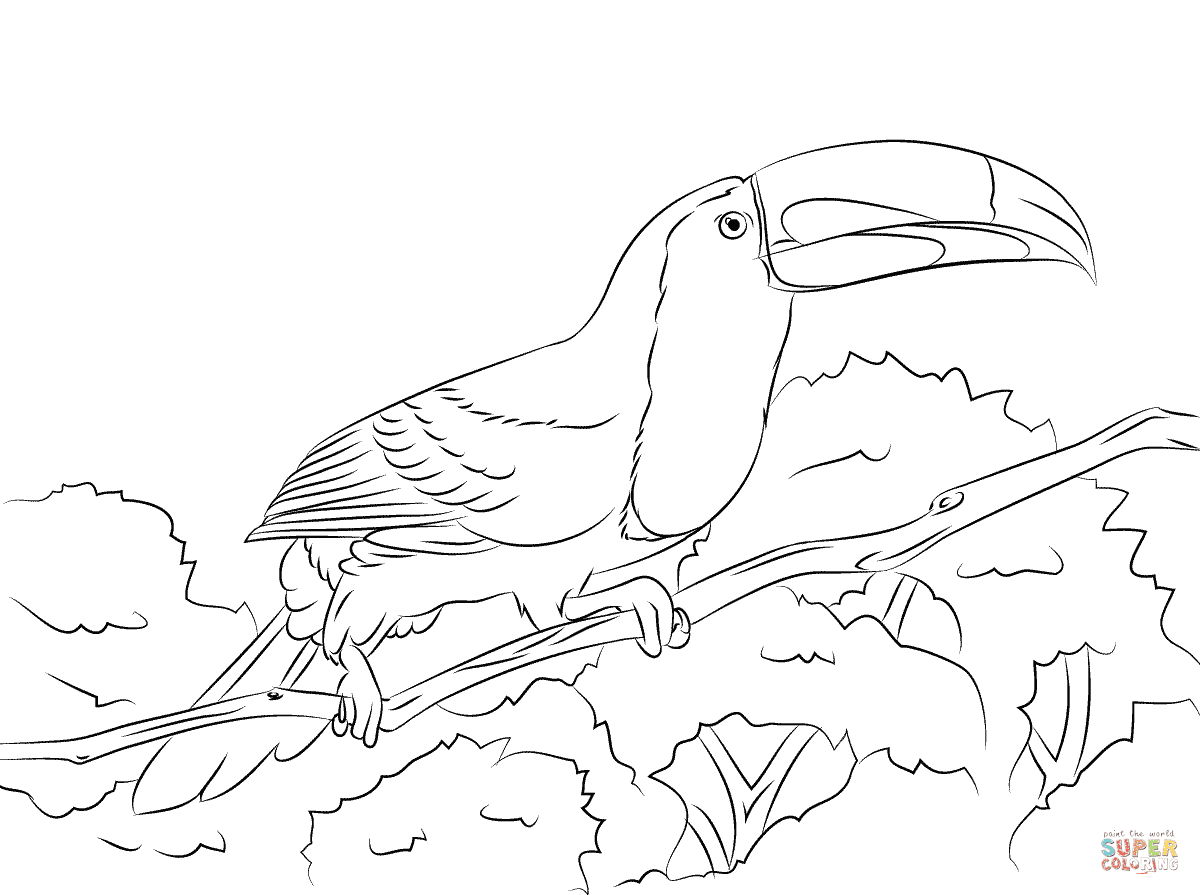 78 Toucan Bird Coloring Pages Pictures