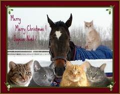 Comme dit la chanson.. ;o) WE WISH YOU A MERRY...