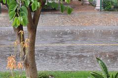 pluie (3)
