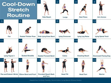 cool  stretch routine cool  stretches