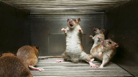 17 Interesting Facts About Mice   OhFact!