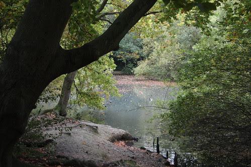 Knighton Wood (23)
