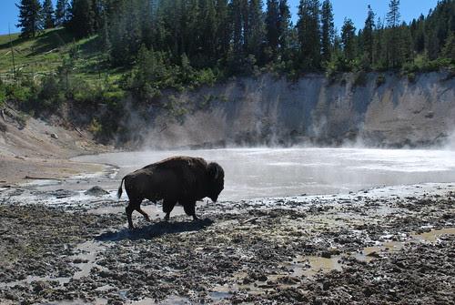 Near the mud boil