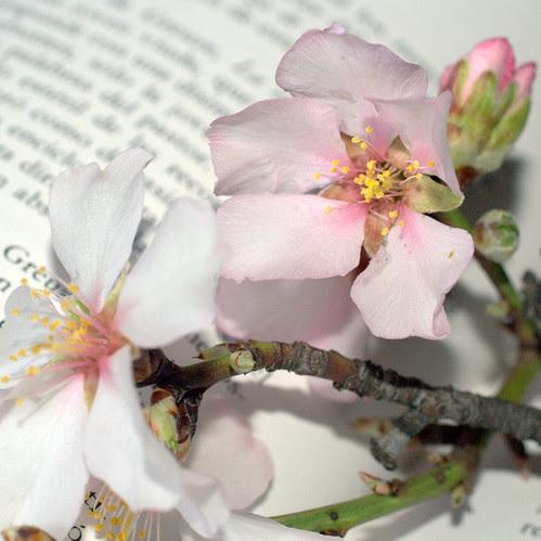 LAs flores de los almendros en 2012