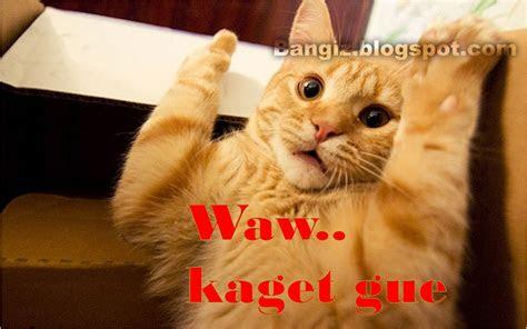wallpaper gambar kucing  kata kata bangiz