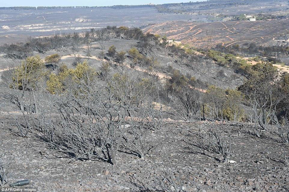 Quando o sol surgiu das chamas queimou-se para fora, deixando arbustos única retorcidos e terra queimada