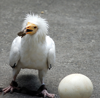The real white angry bird? Probably not, but it had an egg in the picture, so i was sold. Not exactly sure what it is. I'd be a fool if I said a dodo, right? Maybe a young eagle? Really it should be a toucan, but i couldn't find a picture with an egg. And they aren't white, anyway. Bite me.
