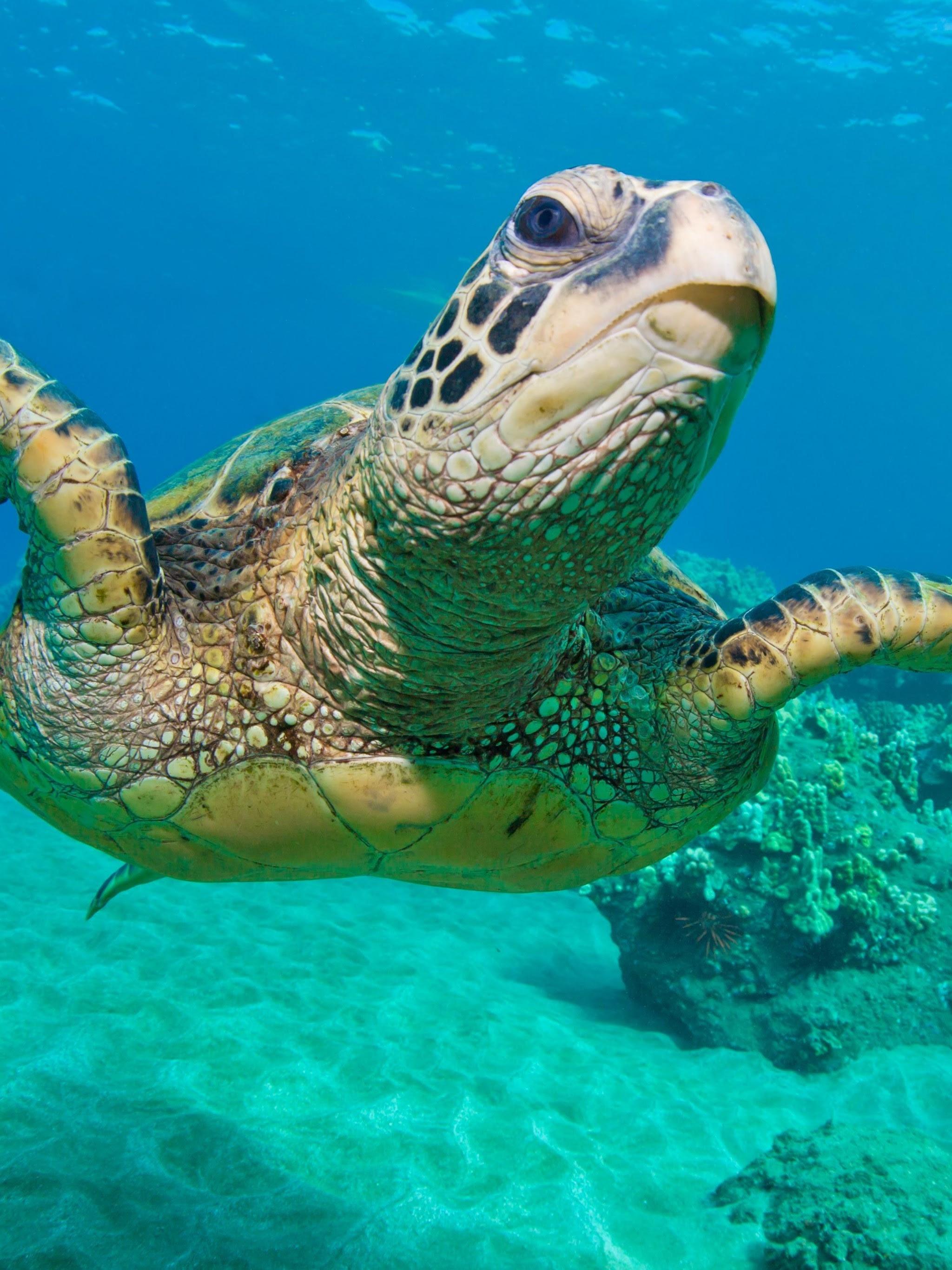 Sea Turtle Wallpaper Desktop (69+ images)