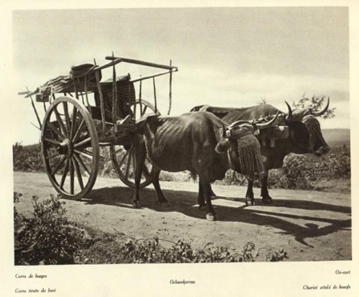 Carro de bueyes en Toledo hacia 1915. Fotografía de Kurt Hielscher.