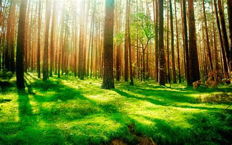 daily wallpaper forest scenery    waste  time