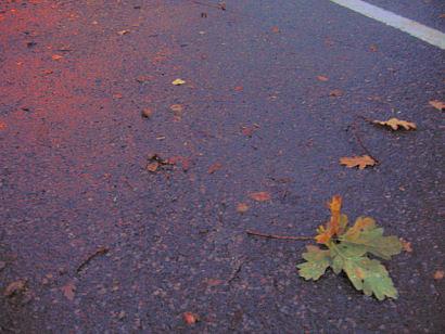 våt høstegate :: wet road at fall