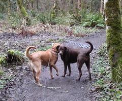 Sadie, Mocha on the trail