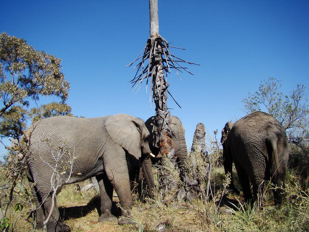 DSC08120 Three elephants