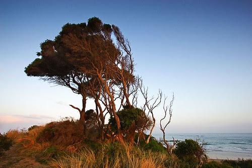 Anglesea, Victoria, Australia IMG_3187_Anglesea