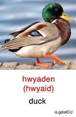 Duck - Welsh flashcard