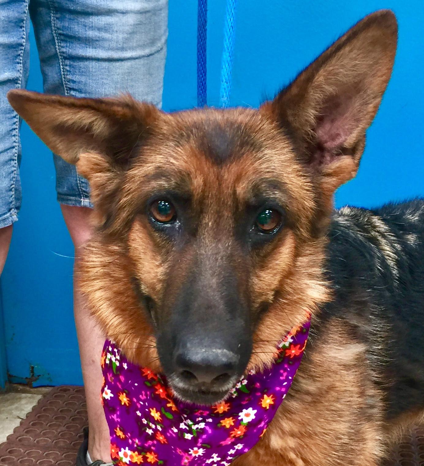 Orange County Craigslist Pets - petfinder