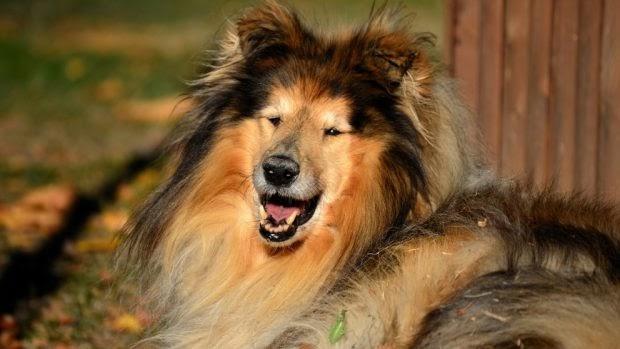 Los 5 Perros Más Bonitos Del Mundo