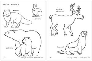 arctic animal coloring pages timeless miraclecom